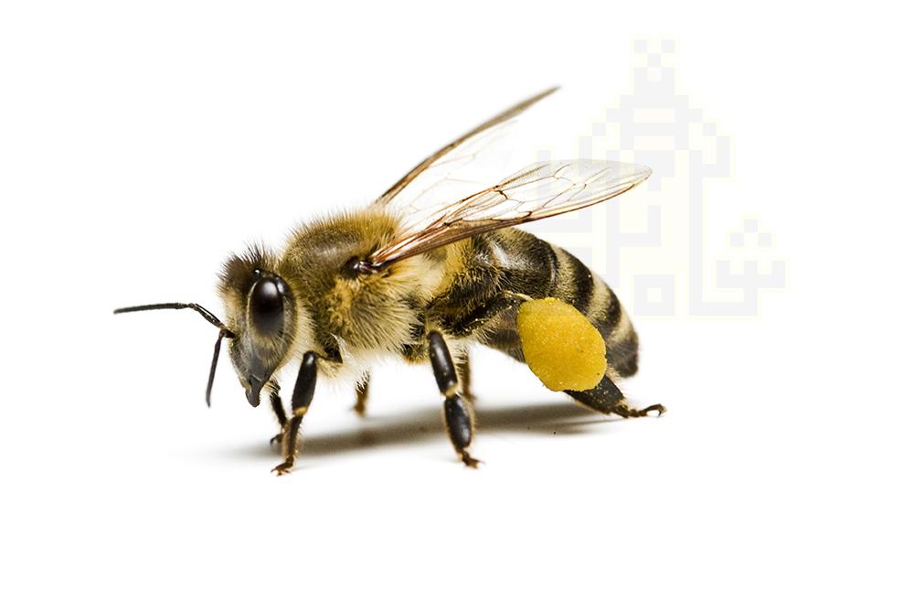 عسل در ادیان مختلف