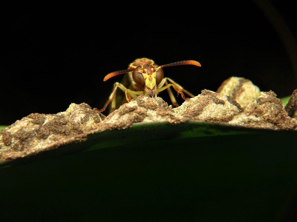 زهر زنبور عسل و بیماری ام اس