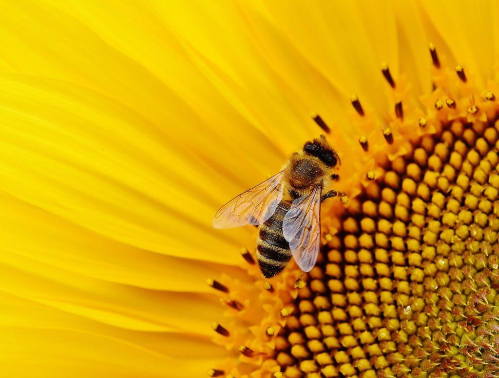 درمان پروستات با گرده گل