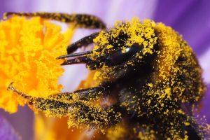 فواید شگفت انگیز گرده گل بر سیستم گوارش